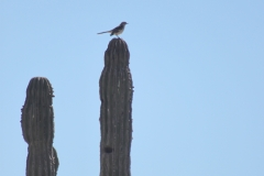 bird_on_cactus_0