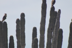 bird_on_cactus_1