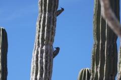 bird_on_cactus_3