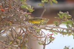 bird_on_tree
