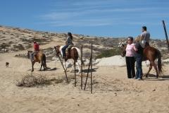 bx_horse_caravan