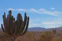 prana_cactus