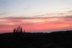 sunset_cactus_2