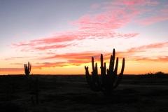 sunset_sx_cactus