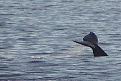 whale_tail_aa_close_again