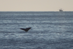 whale_tail_ship