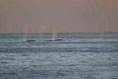 whale_three_spouts