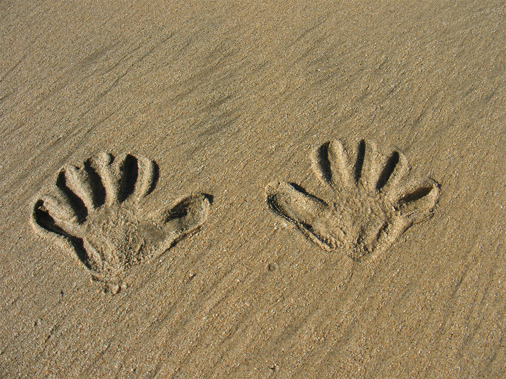 hands imprinted into sand